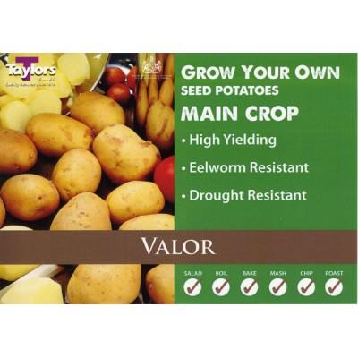 Valor Main 2 kg Seed Potatoes