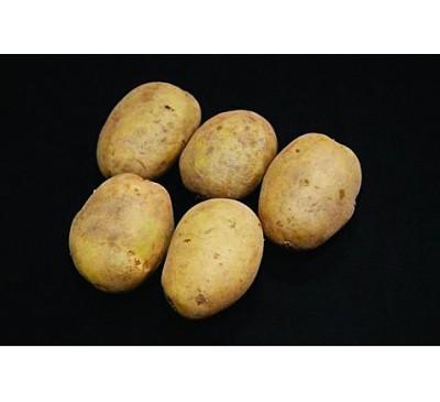 Premiere Seed Potatoes 2kg
