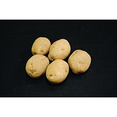 Record 2kg Seed Potatoes