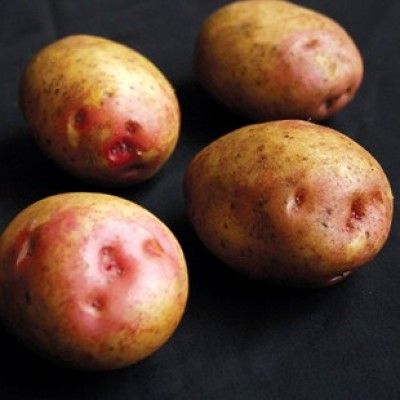 King Edward 2 kg Seed Potatoes