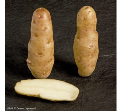 Anya 2 kg Seed Potatoes