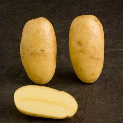Charlotte 2 kg Seed Potatoes