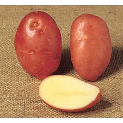 Desiree 2 kg Seed Potatoes