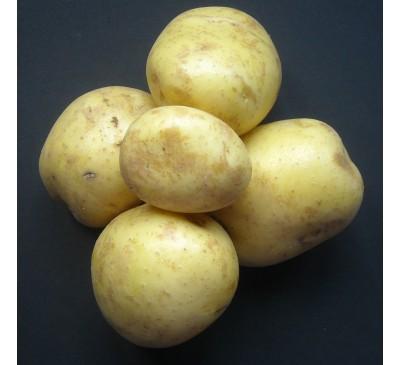 Elfe 2 kg Seed Potatoes