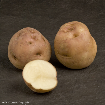 Epicure Early 2 kg Seed Potatoes