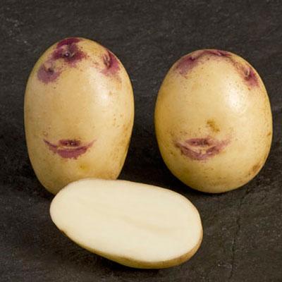 Kestrel 2 kg Seed Potatoes
