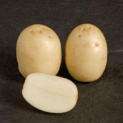 Nadine 2 kg Seed Potatoes