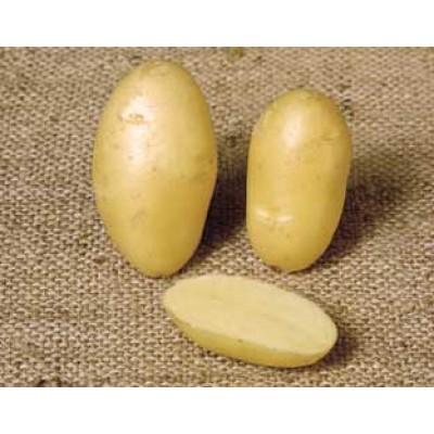 Nicola 2 kg Seed Potatoes