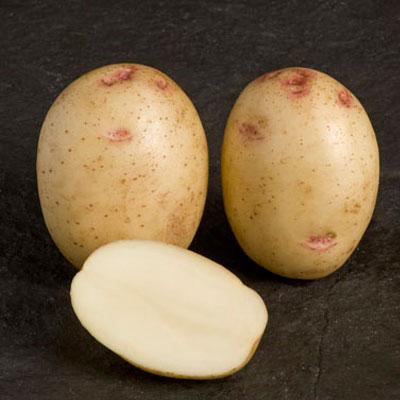 Osprey 2 kg Seed Potatoes
