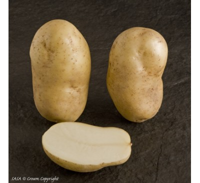 Pentland Crown 2 kg Seed Potatoes