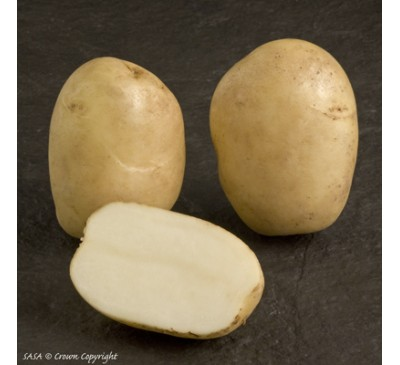 Pentland Javelin 2 kg Seed Potatoes