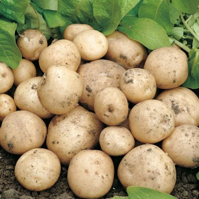Swift 2 kg Seed Potatoes