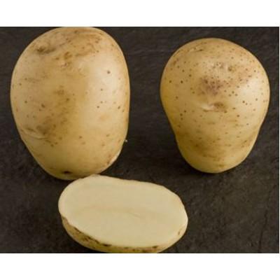 Vivaldi 2 kg Seed Potatoes