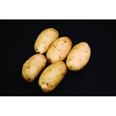 Ulster Prince Seed Potatoes 2kg