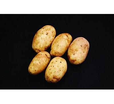 Ulster Sceptre Seed Potatoes 2kg