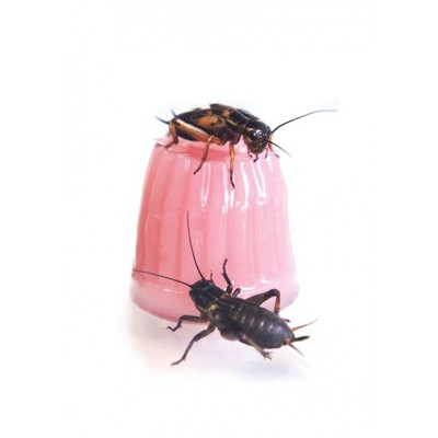 Jelly Pot Calcium 16g