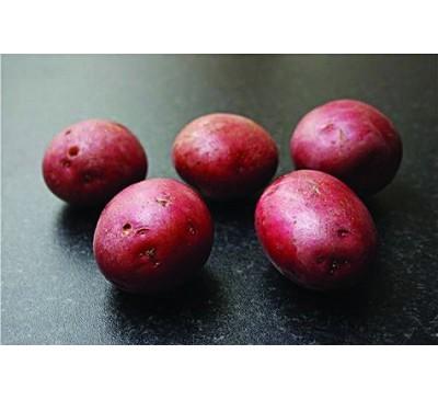 Setanta 2kg Seed Potatoes