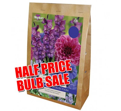 Taylors Bulbs Blue shades collection SALE