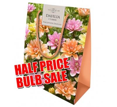 Taylors Bulbs Dahlia Gift Pack SALE