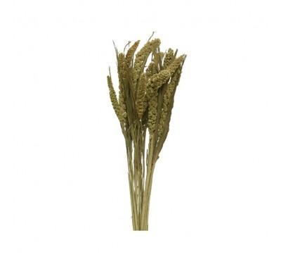 Natural Dried Flower Setaria