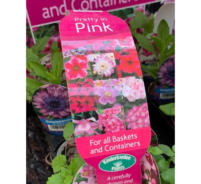 Kinder Garden Plants Collection 8 plants Pretty in Pink