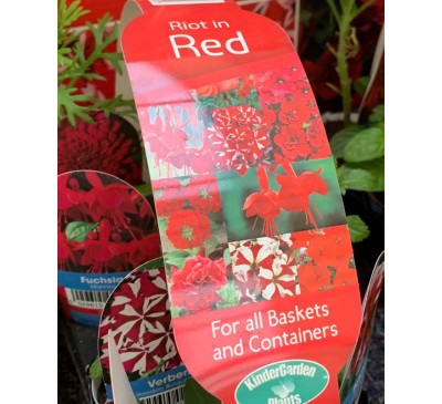 Kinder Garden Plants Collection 8 plants Riot in Red
