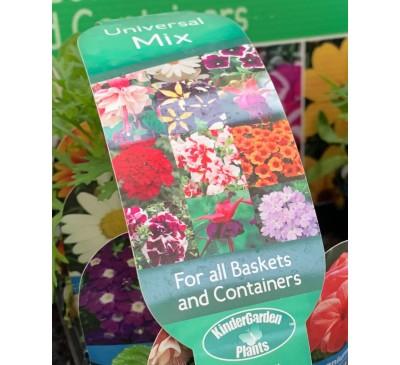 Kinder Garden Plants Collection 8 plants Universal Mix