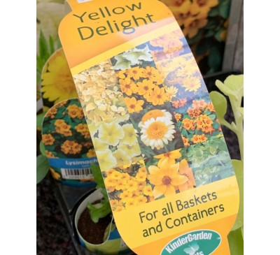 Kinder Garden Plants Collection 8 plants Yellow Delight