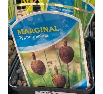 Aquatic Plants - Marginals 1ltr