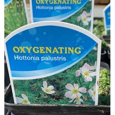 Aquatic Plants - Oxygenators 9cm