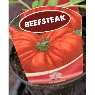 Tomato Super Marmande Beefsteak