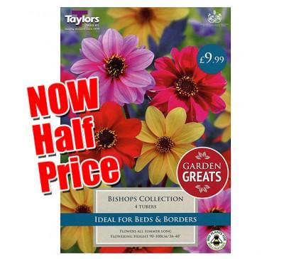 Taylors Bulbs Garden Greats Bishops Dahlia Collection SALE