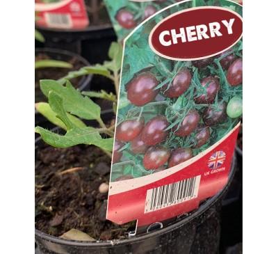 Tomato-  Cherry