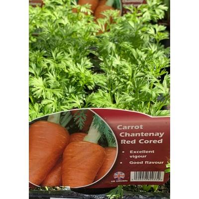 Lockdown Veg Plants Carrots
