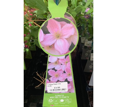 Climbing Plants - Baytree Young Climbers 3 for £10