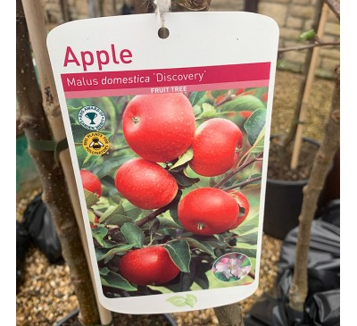 Fruit Tree Apple - Discovery
