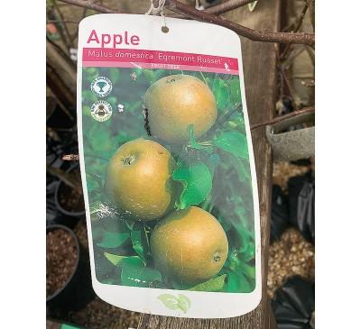 Fruit Tree Apple - Egremont Russet