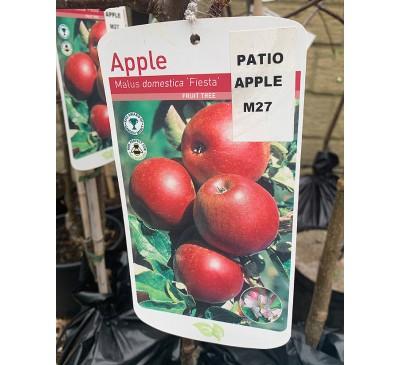 Fruit Tree Apple - Fiesta