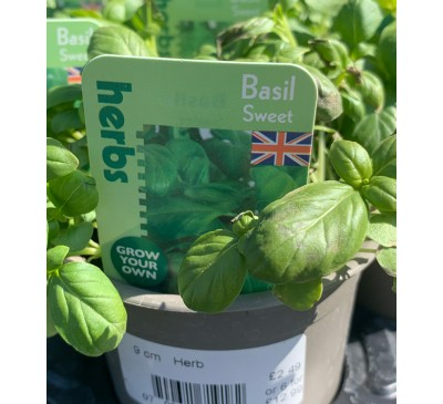 Baytree 9cm Herb Plant