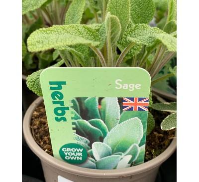 Herb Plants Sage 9cm