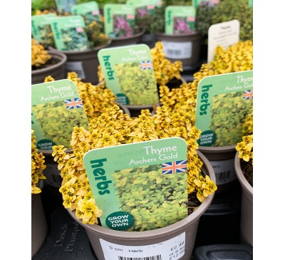 Herb Plants Thyme 9cm