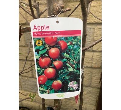 Fruit Tree Apple - Katy