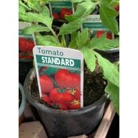 Tomato - Selection