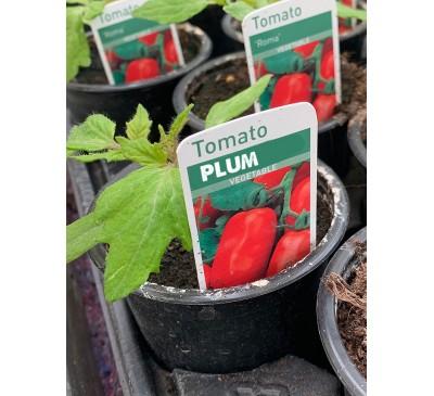 Tomato - Plum