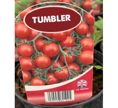 Tomato -Tumbler