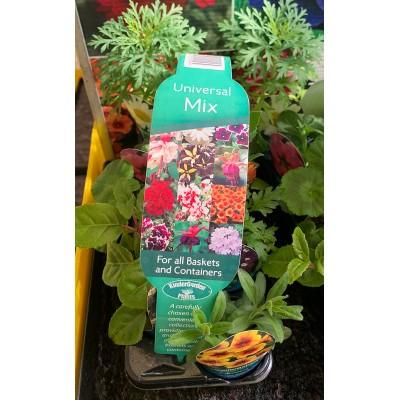 Hanging Basket Flowers - Universal Mix