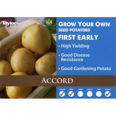 Accord 2 kg Seed Potatoes