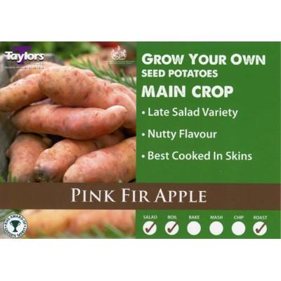Pink Fir Apple 2 kg Seed Potatoes