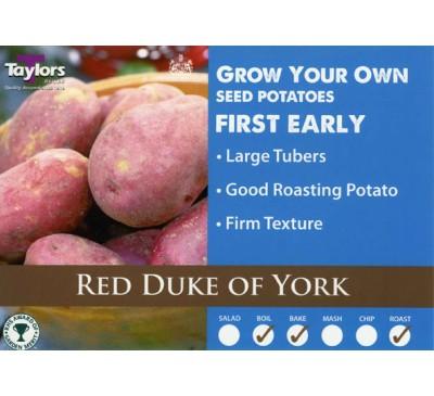 Taster Packs Red Duke Of York Potatoes NOW HALF PRICE