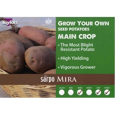 Sarpo Mira 2 kg Seed Potatoes